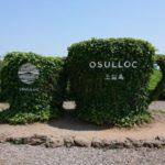済州島でおすすめの観光スポット「O'sulloc TEA Museum(オソルロッティーミュージアム)」への行き方
