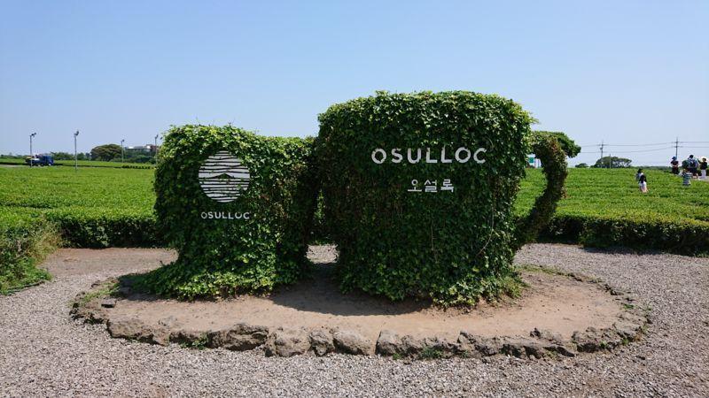 「済州島でおすすめの観光スポット「O'sulloc TEA Museum(オソルロッティーミュージアム)」への行き方」のアイキャッチ画像