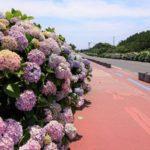 済州島でカメラ片手に行きたいところ!紫陽花と海とインスタ映えスポットを終達里で