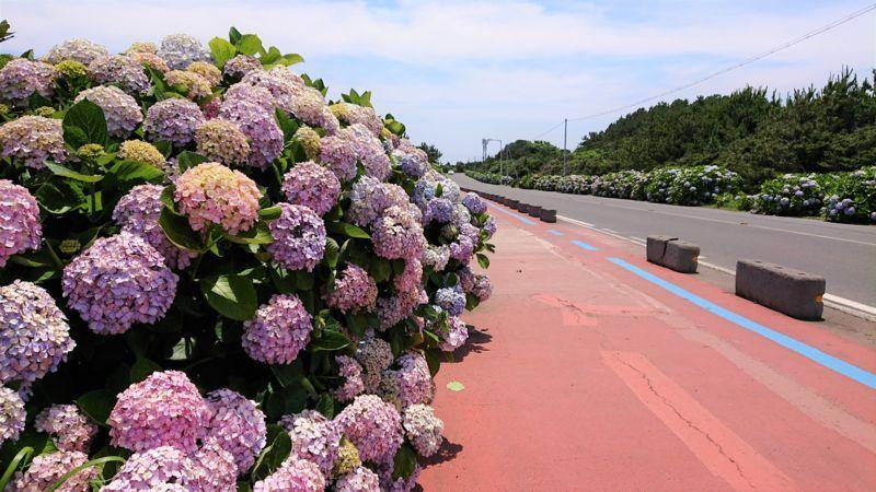 「済州島でカメラ片手に行きたいところ!紫陽花と海とインスタ映えスポットを終達里で」のアイキャッチ画像